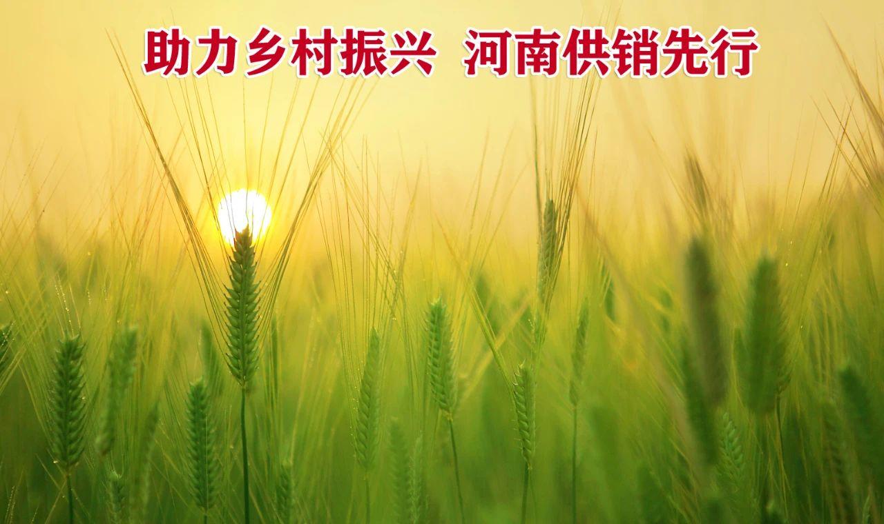 供销合作社如何积极助推河南乡村振兴战略